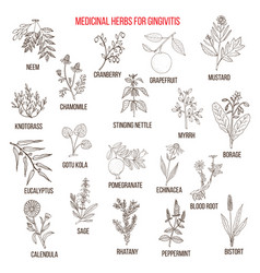 best herbal remedies for gingivitis vector image