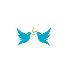 Bird wing dove icon template vector