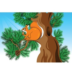 Cartoon squirrel vector image