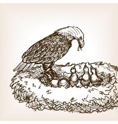 Eagle feeding baby bird sketch vector image