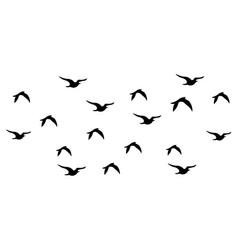 flock birds set design vector image