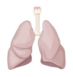 Human healthy lung vector