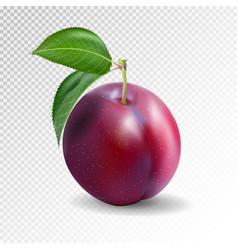 Red plum on a transparent background quality vector