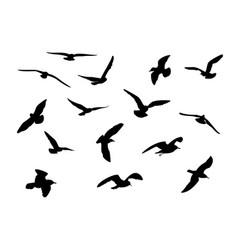 gulls vector image vector image