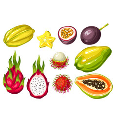 exotic tropical fruits set of asian vector image vector image