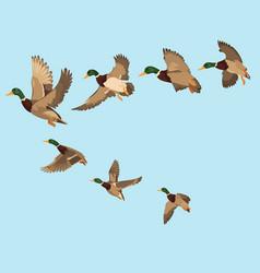a flock ducks cartoon flock birds vector image