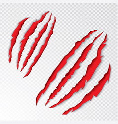 Animal claws scratching vector