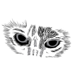 Face of cat on white vector image