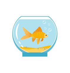 gold fish in small bowl isolated on white vector image vector image
