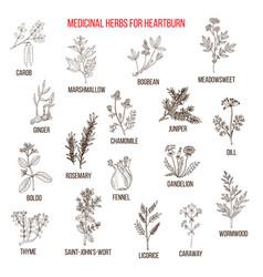 Best herbal remedies for heartburn vector