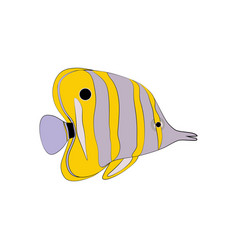Chelmon rostratus copperbanded butterflyfish vector