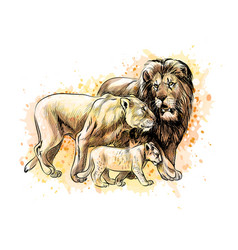 family of lions from a splash of watercolor vector image