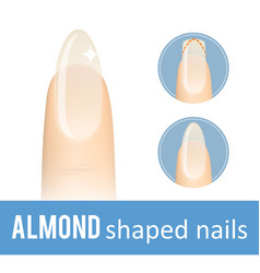 Nail shape almond vector