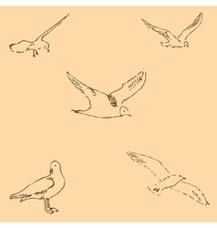 Seagulls sketch pencil drawing by hand figure in vector