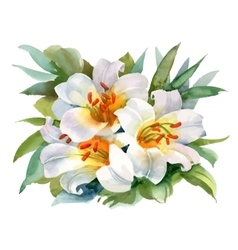 Watercolor Summer Garden Blooming Flower on White vector image