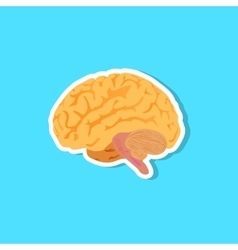 An of the human brain vector image