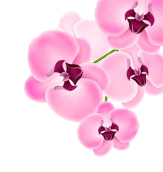 Beautiful orchid vector image
