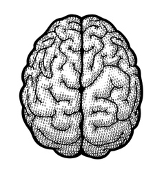 Digital brain vector image