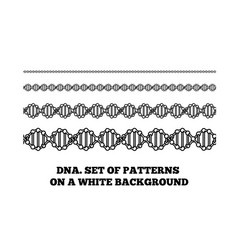 dna structure deoxyribonucleic acid vector image