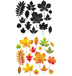 set of autumn leaves collection vector image
