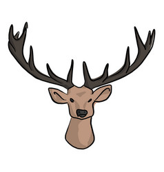 deer head with beautiful horns vector image
