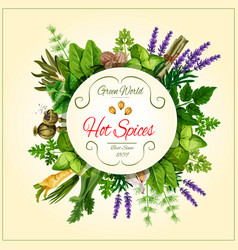 spices and leaf vegetable poster for food design vector image