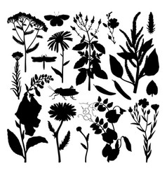 Summer field florals collection set herbs vector