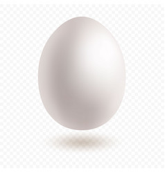 white egg with nice shadow vector image