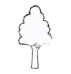 tree plant botanic foliage sketch vector image vector image