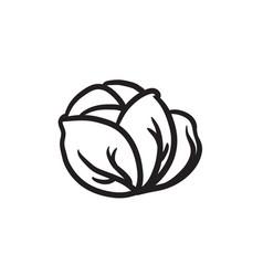 Cabbage sketch icon vector
