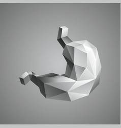 gray low poly human stomach vector image