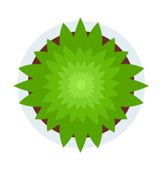 Green plant top view flat icon isolated vector