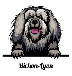 Head bichon-lyon - dog breed color image a vector