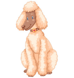 Poodle dog with white fur vector