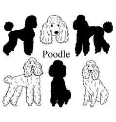 poodle set collection pedigree dogs black vector image