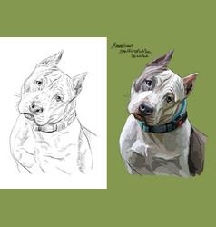 Portrait dog american vector