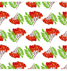 rowan bunch berries red ripe leaf tree autumn vector image