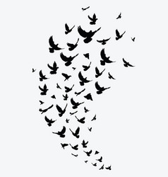 Silhouette a flock birds black contours of vector