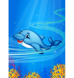 underwater dolphin vector image