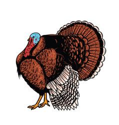 turkey isolated on white background vector image vector image