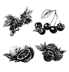 hand drawn vintage set of berries and fruits vector image vector image