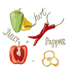 sweet and hot peppers color set of hand drawn vector image