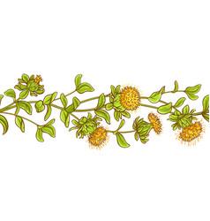 Safflower plant pattern vector