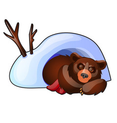 the bear is sleeping in a snow den isolated on vector image