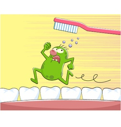 tooth germ vector image