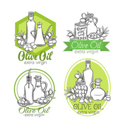 hand drawn sketch olives and olive oil vector image