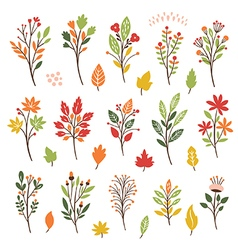 Colorful floral collection with leaves and flowers vector image vector image