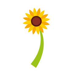 beautifull sunflower isolated icon vector image