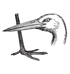Stork head and leg vintage vector