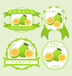 The theme pomelo vector